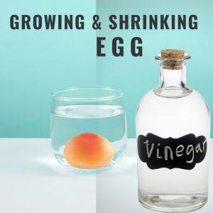 Shrinking egg